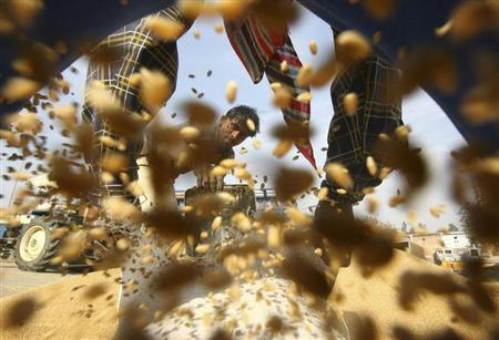 A labourer fills a sack of wheat at a wholesale grain market in Chandigarh January 27, 2011. REUTERS/Ajay Verma/Files