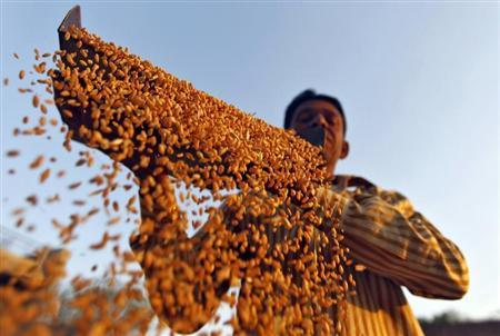 A farmer sifts his wheat crop at a farm on the outskirts of western Indian city of Ahmedabad March 6, 2013. REUTERS/Amit Dave