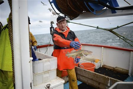 Skipper of the Whitby Rose, Howard Locker sorts his catch aboard his trawler in the North Sea, off the coast of Whitby, northern England February 28, 2013. REUTERS/Dylan Martinez