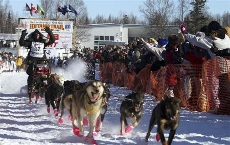 Defending Iditarod Champion Lance Mackey runs his team up the starting chute of the official start of Iditarod Trail Sled Dog Race in Willow, Alaska, March 6, 2011. REUTERS/Al Grillo