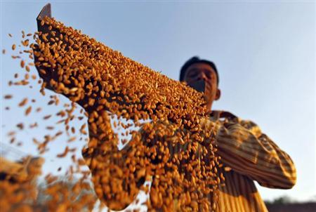 A farmer sifts his wheat crop at a farm on the outskirts of Ahmedabad March 6, 2013. REUTERS/Amit Dave