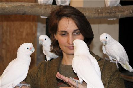 Scientist Alice Auersperg is pictured with cockatoos in this undated handout picture released by University of Vienna, March 13, 2013. REUTERS/Julia Auersperg/University of Vienna/Handout