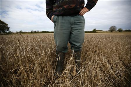 A farmer stands in a patch of unharvested wheat in Ashby-de-la-Zouch, central England October 26, 2012. REUTERS/Darren Staples