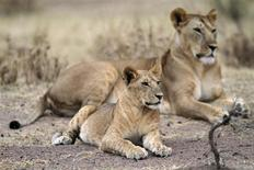 A lioness rests with its cub at Tanzania's Serengeti National Park August 19, 2012. REUTERS/Noor Khamis