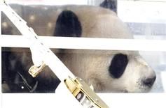 One of two Panda bears arrive at Pearson International airport in Toronto March 25, 2013. REUTERS/Fred Thornhill