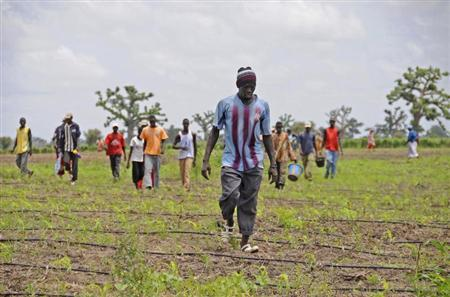 A group of Senegalese farmers finish the day's work in a cabbage field on a small Senegalese farm at Djilakh, 80 km (50 miles) southeast of Dakar, August 28, 2008 . REUTERS/Ricci Shryock