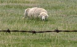 """Paris s'apprête à confier pour la première fois l'entretien de ses pelouses à quatre moutons, sur un seul site pour le moment, afin de limiter l'usage d'engins mécaniques et de désherbants, une nouvelle étape vers une capitale plus """"verte"""". /Photo d'archives/REUTERS/Tim Wimborne"""