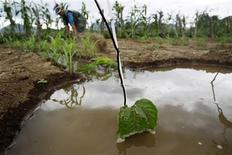 Irrigation water is seen near passionfruit crops after a rare rain in the outskirts of Olmos in Peru's northwestern region of Lambayeque, in this March 14, 2013 file photo. REUTERS/Enrique Castro-Mendivil/Files