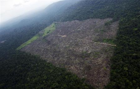 An aerial photograph shows a tract of Amazon jungle recently cleared by loggers and farmers, near Altamira in Para State, November 15, 2012. REUTERS/Stian Bergeland/Rainforest Foundation Norway/Handout
