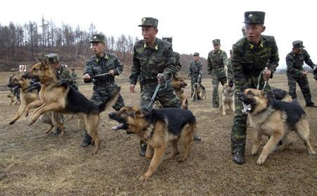 North Korean soldiers with military dogs take part in drills in an unknown location in this picture taken on April 6, 2013 and released by North Korea's official KCNA news agency in Pyongyang on April 7, 2013. REUTERS/KCNA