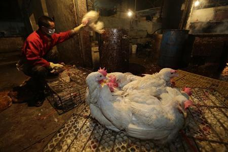 A vendor throws a chicken into a bucket in the process of slaughtering them at a poultry market in Wuhan, Hubei province, April 6, 2013. REUTERS/Stringer