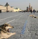 Бродячие собаки греются на солнце на Красной площади в Москве 29 марта 2007 года. Рабочая неделя принесет в российскую столицу потепление и обойдется почти без осадков, ожидают синоптики. REUTERS/Denis Sinyakov
