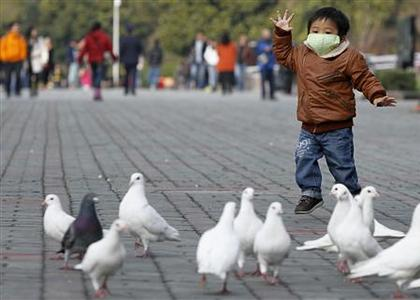 A boy looks at pigeons at a public park in People Square, downtown Shanghai April 6, 2013. REUTERS-Aly Song