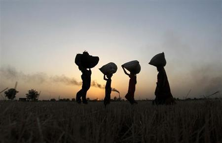 Labourers carry harvested wheat as they walk in a field on the outskirts of Ahmedabad March 14, 2013. REUTERS/Amit Dave/Files