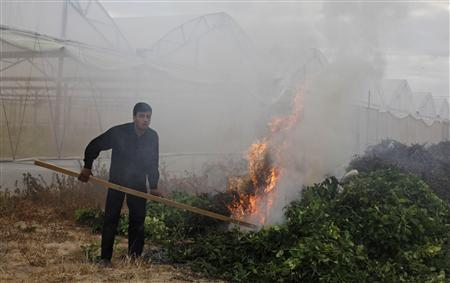 A Palestinian farmer burns mints at a farm in Khan Younis in the southern Gaza Strip April 13, 2013. Palestinian farmers in Gaza began destroying three tonnes of herbs on Saturday, saying a prolonged closure of the crossing into Israel meant the plants were no longer fit for export to Europe. REUTERS/Ibraheem Abu Mustafa