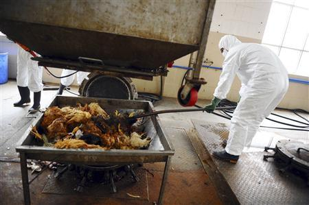 Employees dispose uninfected dead birds at a treatment plant as part of preventive measures against the H7N9 bird flu in Guangzhou, Guangdong province, April 16, 2013. REUTERS/Stringer
