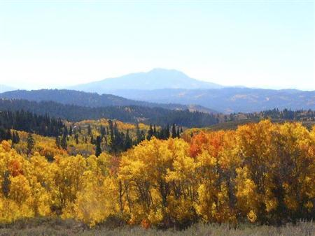 Aspen trees in the Caribou-Targhee National Forest in Idaho are seen in this undated photograph. REUTERS/U.S. Forest Service/Handout