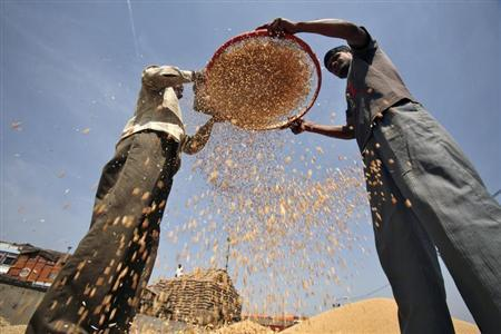Labourers sift wheat crop at a wholesale grain market in the northern Indian city of Chandigarh April 17, 2013. REUTERS/Ajay Verma