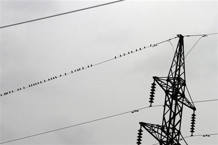 Birds perch on power lines above farmland near Tirana January 14, 2013. REUTERS/Arben Celi