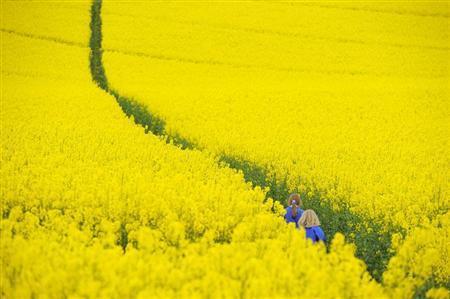 Children walk through a field of rapeseed near Boroughbridge in northern England May 11, 2010. REUTERS/Nigel Roddis