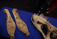 A dinosaur fossil is seen during a ceremony in New York in this May 6, 2013 file photo. REUTERS/Eric Thayer/Files