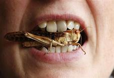 Mulher posa para foto com um gafanhoto entre os dentes em evento gastonômico em Bruxelas. A simples ideia de comer besouros, lagartas e formigas pode dar arrepios, mas os autores de um relatório das Nações Unidas publicado nesta segunda-feira afirmam que os benefícios do consumo de insetos nutritivos podem ajudar a combater a obesidade. 20/10/2012. REUTERS/Francois Lenoir