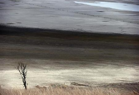 A dead tree stands in front of shallow water and a dried-up area of Lake George, located 50 km (31 miles) north of the Australian capital city of Canberra May 13, 2013. REUTERS/David Gray