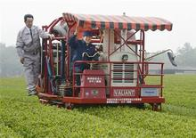 Japan's Prime Minister Shinzo Abe (C) has a go at cropping tea leaves in Kitsuki, Oita prefecture, in this photo taken by Kyodo May 18, 2013.REUTERS/Kyodo