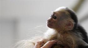 Mally, o macaco de estimação do cantor canadense Justin Bieber, em um abrigo para animais em Munique, 2 de abril de 2013. O macaco que pertencia ao popstar Justin Bieber tornou-se propriedade nacional alemã, uma vez que o cantor não forneceu às autoridades documentos necessários para recuperar o animal capturado por funcionários aduaneiros. 02/04/2013 REUTERS/Michaela Rehle