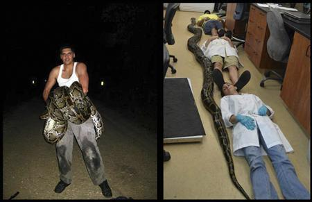 A Florida Fish and Wildlife Conservation Commission (FWC) combination handout photo shows Jason Leon (L), who caught an 18-foot, 8-inch Burmese python in southeast Miami-Dade County May 11, 2013. REUTERS/Florida Fish and Wildlife Conservation Commission (FWC)/Handout via Reuters