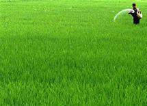 Индийский фермер удобряет почву на поле в городе Амритсар, 2 августа 2005 года. Российский монополист в производстве калийных удобрений Уралкалий не планирует заключать контракт с Китаем на поставку хлористого калия на второе полугодие из-за неблагоприятной конъюнктуры рынка, сказал Рейтер представитель компании в пятницу. REUTERS/Munish Sharma