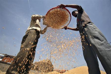 Labourers sift wheat crop at a wholesale grain market in Chandigarh April 17, 2013. REUTERS/Ajay Verma/Files