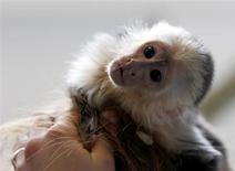 Mally, macaco de estimação do cantor canadense Justin Bieber fotografado em lar de animais, em Munique. Mally foi levado a um parque de animais selvagens na Alemanha, uma vez que o cantor não apresentou a documentação necessária para liberá-lo na alfândega. 2/04/2013. REUTERS/Michaela Rehle