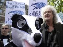 L'ancien guitariste de Queen, Brian May, a pris la tête samedi d'une manifestation de protestation contre le projet des pouvoirs publics d'abattage d'environ 5.000 blaireaux en Grande-Bretagne, dans le cadre de la lutte contre la propagation de la tuberculose bovine. /Photo prise le 1er juin 2013/REUTERS/Dylan Martinez