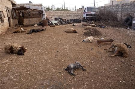 Animal carcasses lie on the ground, killed by what residents said was a chemical weapon attack on Tuesday, in Khan al-Assal area near the northern city of Aleppo, March 23, 2013. REUTERS/George Ourfalian