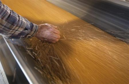 Dan Lizee, operation manager, picks up a handful of wheat off the conveyor belts that transfer wheat from trains to cargo ships at the Alliance Grain Terminal in Vancouver, British Columbia October 6, 2011. REUTERS/Ben Nelms