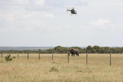Relocating elephants