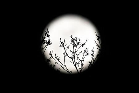Spring buds are silhouetted against the rising full moon in Washington, March 19, 2011.REUTERS/Hyungwon Kang