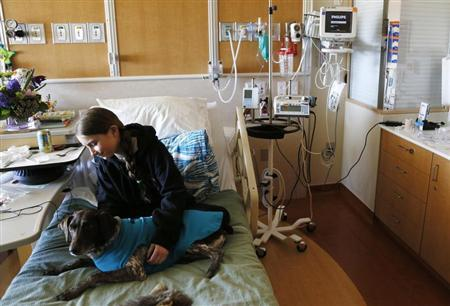Lily Sroboda, 11, a patient at Childrens Hospital Colorado, gets a visit from Brownie, a therapy dog missing a foot in Aurora April 14, 2013. REUTERS/Rick Wilking