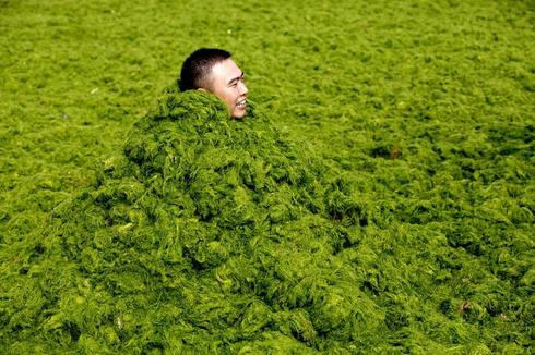 China's algae summer