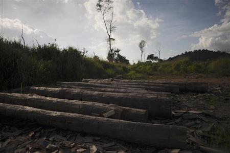 Logs extracted illegally from the Amazon rainforest lie on the ground in Anapu, June 2, 2012. REUTERS/Lunae Parracho