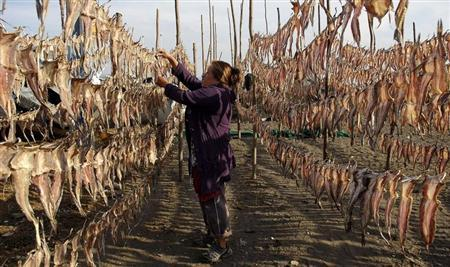 A resident collects dried fish, to be sold at the market, outside her home in Coronel town, some 550 km (335 miles) southwest of Santiago March 19, 2013. REUTERS/Jose Luis Saavedra