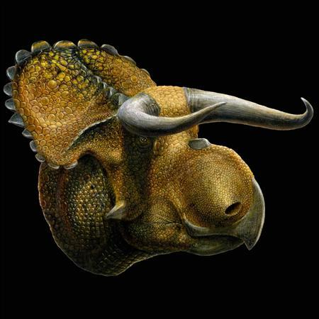 An artist's version of the newly discovered horned dinosaur Nasutoceratops titusi, discovered in the Grand Staircase-Escalante National Monument in southern Utah, is shown in this image released by the Natural History Museum of Utah on July 17, 2013. REUTERS/Lukas Panzann/The Natural History Museum of Utah/Handout via Reuters