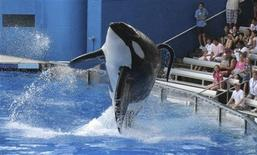 "Tillikum, a killer whale at SeaWorld amusement park, performs during the show ""Believe"" in Orlando in this September 3, 2009 file photo. REUTERS/Mathieu Belanger/Files"