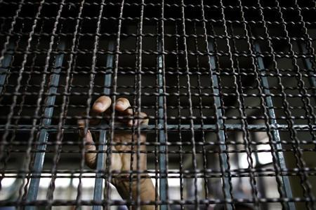 A Rohingya Muslim illegal immigrant puts his hand on the railing inside the Immigration Detention Centre during the Muslim holy fasting month of Ramadan in Kanchanaburi province July 10, 2013. REUTERS/Athit Perawongmetha