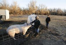 Third grade students Cody Eye and Elizabeth Harder feed the hogs at the Walton Rural Life Center Elementary School, in Walton, Kansas, January 18, 2013. REUTERS/Jeff Tuttle