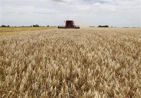 A combine harvester is used to harvest wheat in a field in the village of General Belgrano, 160 km (100 miles) west of Buenos Aires, December 18, 2012. REUTERS/Enrique Marcarian