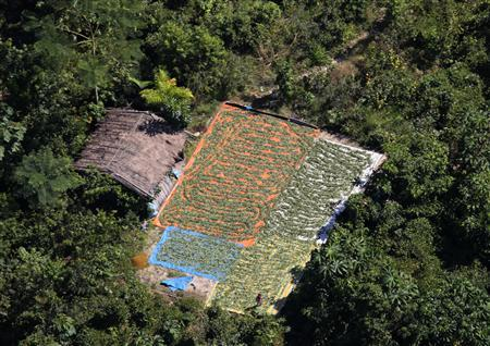 An aerial view of drying coca leaves at the Carrasco National Park, Chapare region, some 600 km (373 miles) southeast of La Paz May 29, 2012. REUTERS/David Mercado