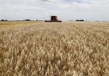 Imagen de la cosecha de trigo en un campo cerca de la localidad de General Belgrano, en Argentina. Foto de archivo. Reuters/Enrique Marcarian. La producción argentina de trigo del ciclo 2013/14 será de 12 millones de toneladas, por debajo de los 13 millones previstos el mes pasado, estimó el lunes el Departamento de Agricultura de Estados Unidos (USDA, por su sigla en inglés).