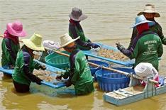 IMAGEN DE ARCHIVO: Pescadores tailandeses de camarones los recolectan desde el agua fresca en la provincia de Suphan Buri. REUTERS/Chaiwat Subprasom